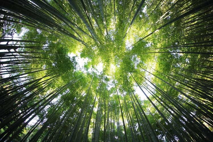 Flessibili come canne di bambù