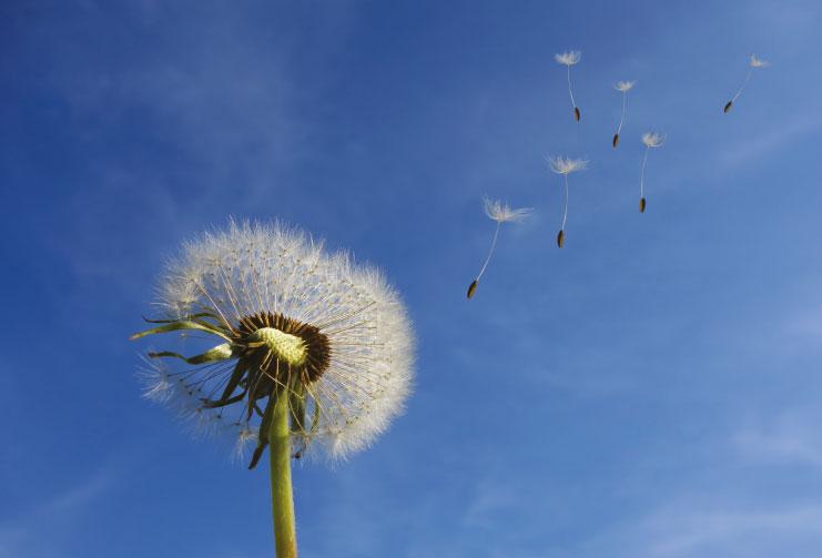 Workshop - Parole al vento