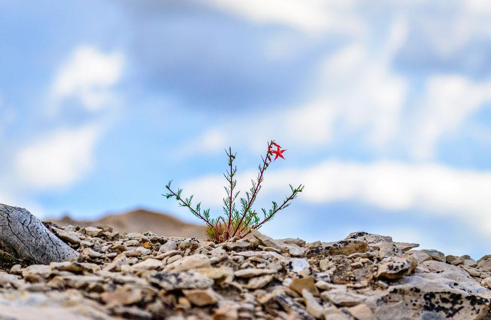 Resilienza, tutti ne parlano, ma sappiamo cos'è?